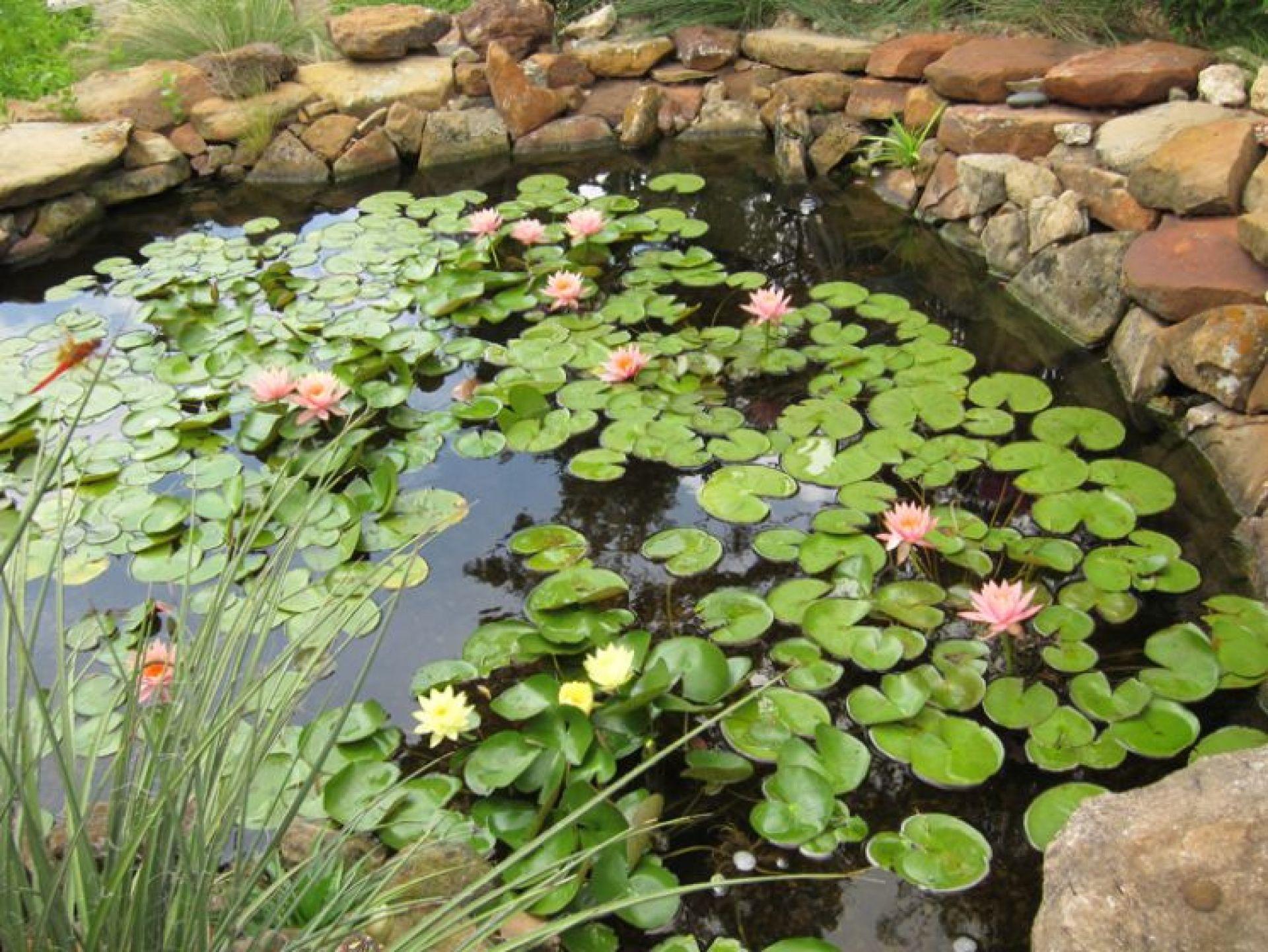 Mini Laghetto Per Terrazzo come creare un giardino acquatico?