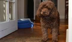 Animali in casa: ecco le regole condominiali da seguire